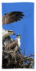 Hand Towel featuring the photograph Osprey Chicks Ready To Fledge by Debbie Stahre