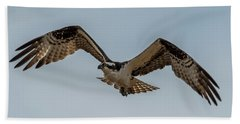 Osprey Flying Hand Towel by Paul Freidlund