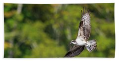 Osprey Square Hand Towel by Bill Wakeley