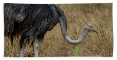 Ostrich In The Grass 2 Hand Towel