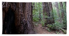 Pathway Through A Redwood Forest On Mt Tamalpais Bath Towel