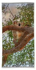 Bath Towel featuring the photograph Patience Brings Koalas by Hanny Heim