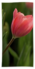 Hand Towel featuring the photograph Peeking Tulip by Mary Jo Allen