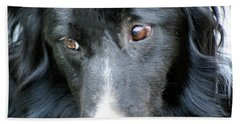 Pensive Border Collie Bath Towel