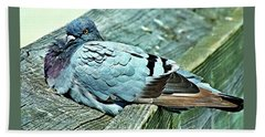 Perched Rock Dove Bath Towel