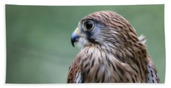 European Kestrel Bath Towel