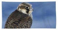 Peregrine Falcon Juvenile Close Up Bath Towel
