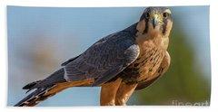 Peregrine Falcon Wildlife Art By Kaylyn Franks Hand Towel