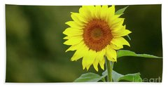 Perfect Sunflower Hand Towel