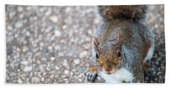 Photo Of Squirel Looking Up From The Ground Bath Towel