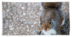 Photo Of Squirel Looking Up From The Ground Hand Towel