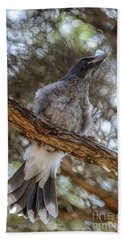 Pied Currawong Chick 1 Bath Towel