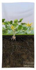 Pilewort Or Lesser Celandine Ranunculus Ficaria - Root System -  Bath Towel