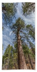 Pine Cathedral On The West Fork Bath Towel