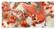 Pine Grosbeak Hand Towel