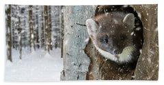 Pine Marten In Tree In Winter Hand Towel