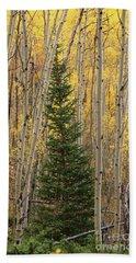Pine Tree Among Aspens  4874 Hand Towel