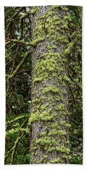 Hand Towel featuring the photograph Pine Tree Moss by James BO Insogna