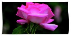 Bath Towel featuring the photograph Pink And White Rose 005 by George Bostian