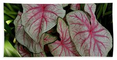 Pink Elephant Ear Plant Hand Towel by Patricia Strand