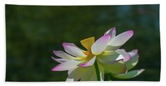 Pink Lotus Embracing The Sun Hand Towel