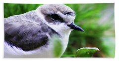 Hand Towel featuring the photograph Piping Plover by Anthony Jones