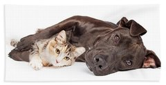Pit Bull Dog And Kitten Cuddling Hand Towel