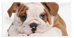 Po-faced Bulldog Bath Towel