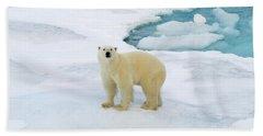 Polar Gaze Hand Towel