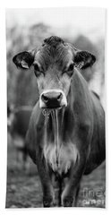 Portrait Of A Dairy Cow In The Rain Stowe Vermont Hand Towel