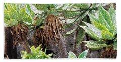 Potted Agave Plants Bath Towel