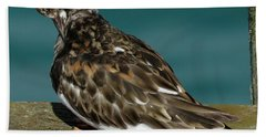 Preening Turnstone Bath Towel
