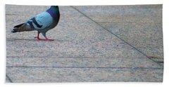 Pretty Pigeon Posing On A Sidwalk Hand Towel