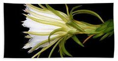 Profile Night Blooming Cereus Hand Towel by Barbara Chichester