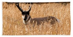 Bath Towel featuring the photograph Pronghorn by Jennifer Ancker