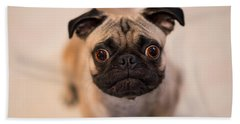 Bath Towel featuring the photograph Pug Dog by Laura Fasulo