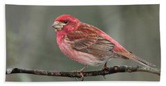 Purble Finch Bath Towel by Alan Lenk