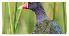 Purple Gallinule Bath Towel