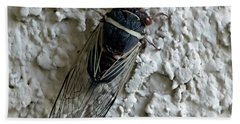 Bath Towel featuring the photograph Putnam's Cicada by Anne Rodkin