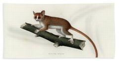 Pygmy Mouse Lemur Hand Towel by Hugo Troschel