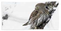 Pygmy Owl Bath Towel