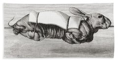 Rabbit Dressed And Prepared For Spit Hand Towel