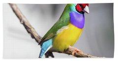 Rainbow Finch Hand Towel