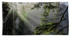 Morning Rays Through An Oregon Rain Forest Hand Towel