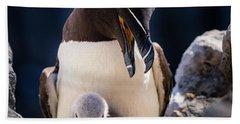 Razorbill With Chick, Farne Islands Hand Towel