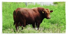Hand Towel featuring the photograph Red Angus Bull by J L Zarek