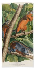 Red Bellied Squirrel  Hand Towel by John James Audubon