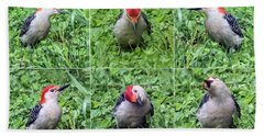 Red-bellied Woodpecker Posing In The Grass Hand Towel