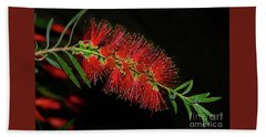 Hand Towel featuring the photograph Red Bottlebrush By Kaye Menner by Kaye Menner