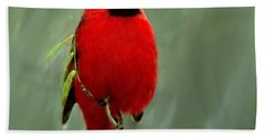 Red Cardinal Painting Hand Towel by Bob and Nadine Johnston